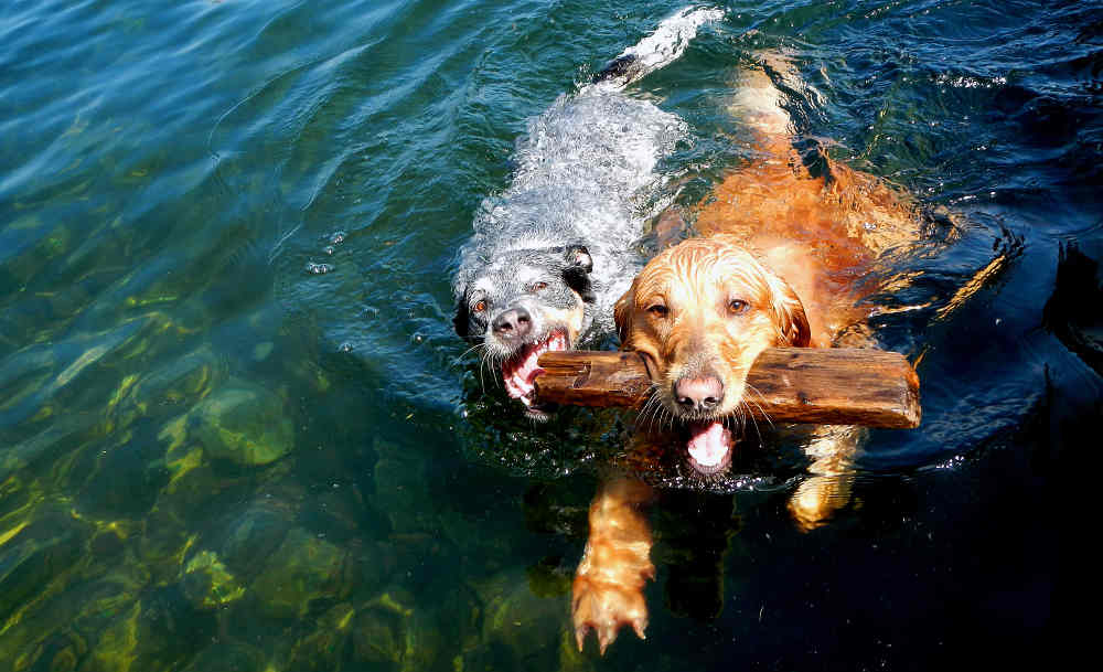 Dogs in clean water